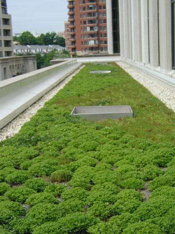 Techos Verdes en las terrazas de Buenos Aires - Proyecto de Ley